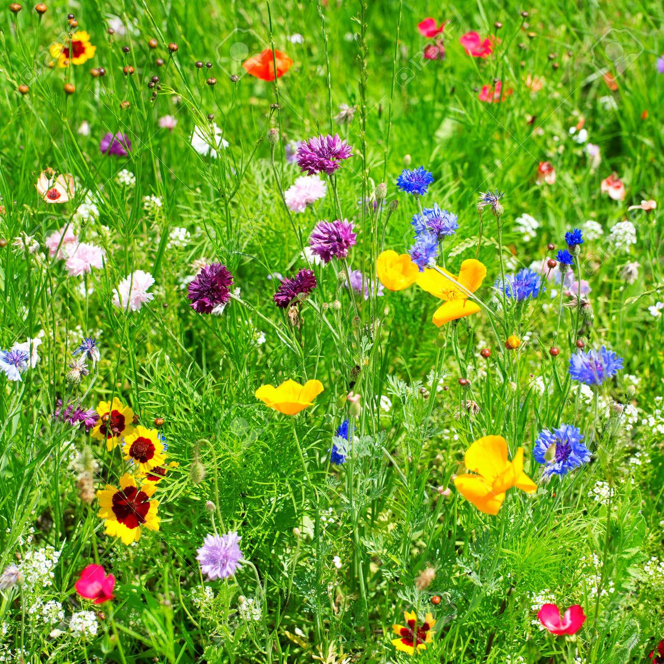 wild flowers Stock Photo - 15884927