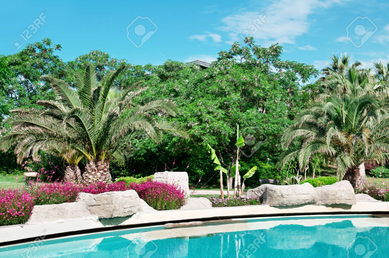 palm trees and flowers around the outdoor pool stock photo