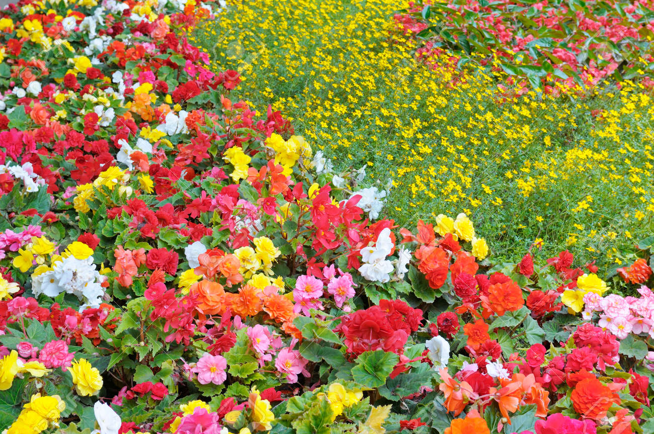 Beautiful background of bright garden flowers stock photo picture beautiful background of bright garden flowers stock photo 33675846 izmirmasajfo Choice Image
