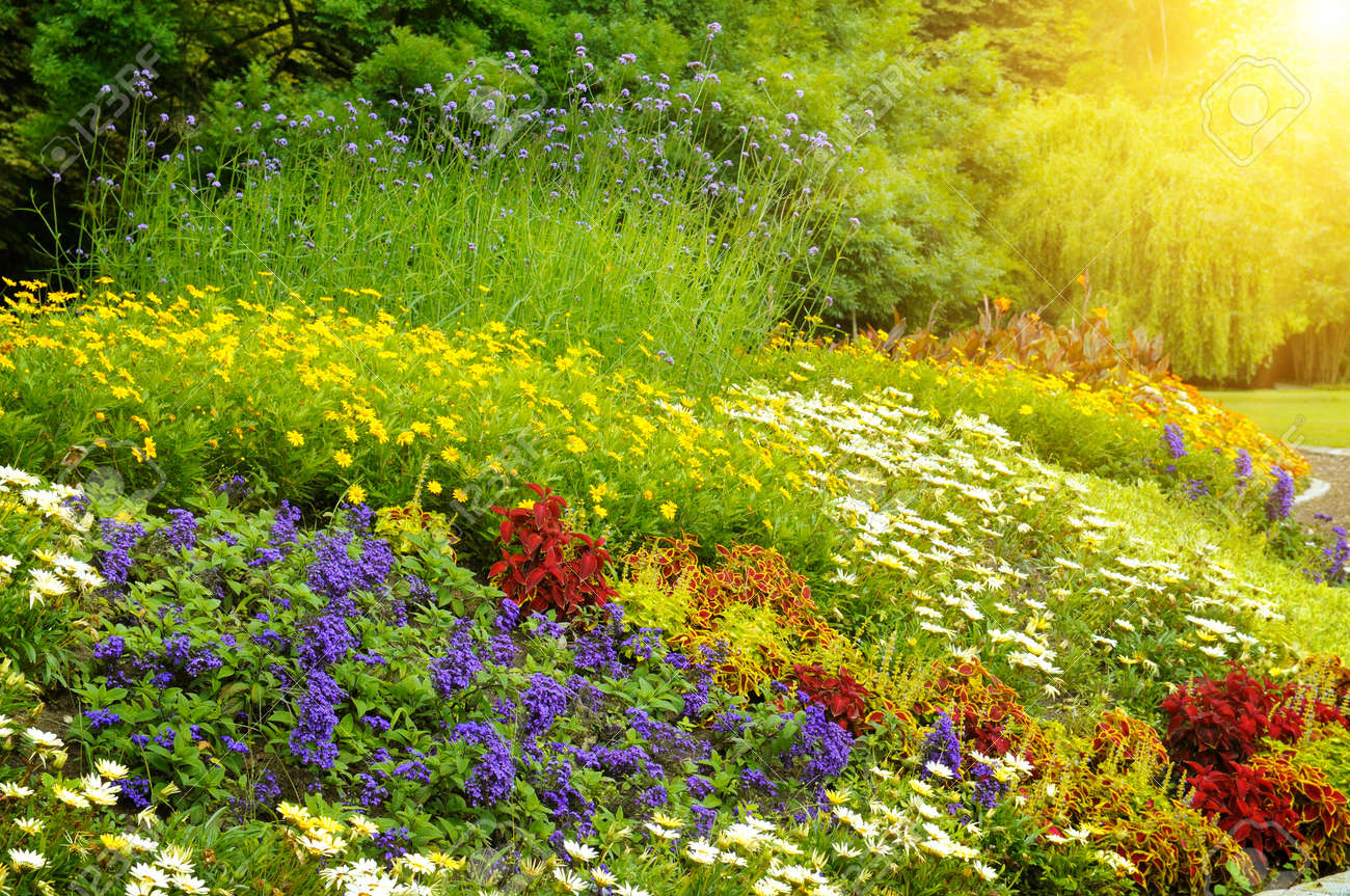 Beautiful Background Of Bright Garden Flowers Stock Photo Picture