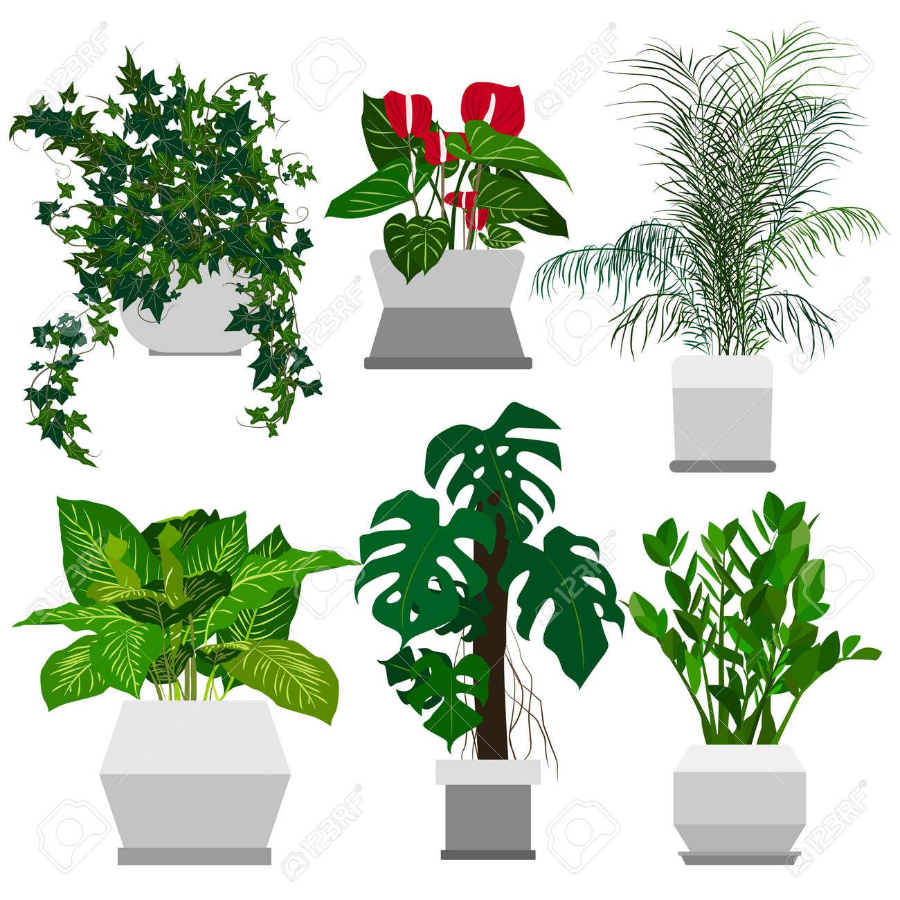 conjunto de plantas de interior en macetas inicio flores hechas en estilo plano ilustracin