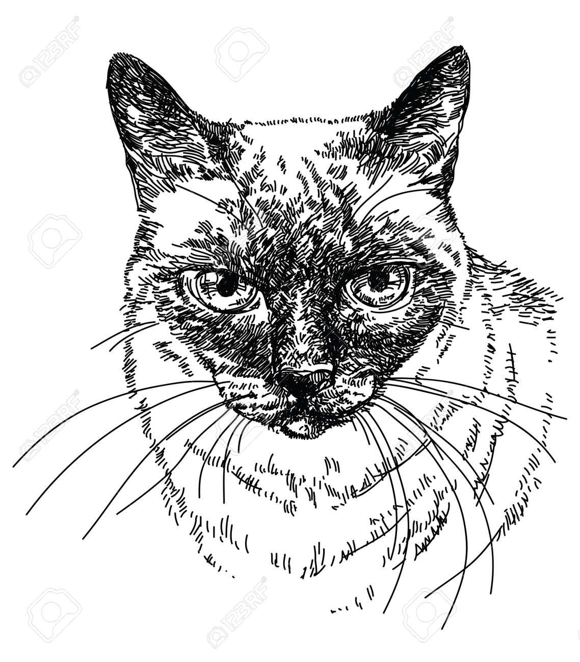 シャム猫頭は手描きのイラスト ベクターしますのイラスト素材ベクタ
