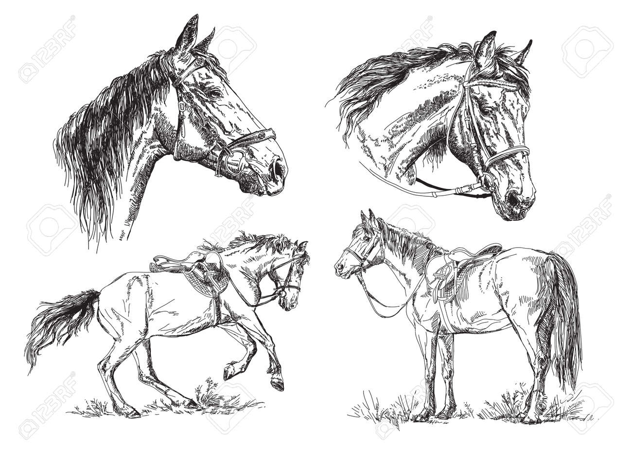 Set Of Vector Hand Drawing Horses With Bridle And Saddle In Black Royalty Free Cliparts Vectors And Stock Illustration Image 72361623