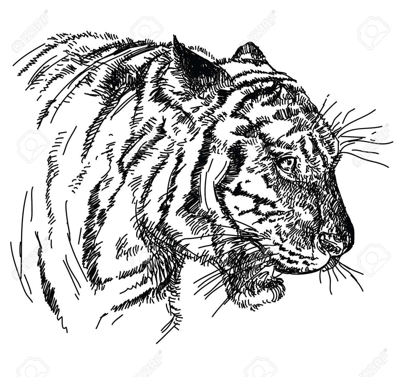 Tigre Tête Vecteur Main Dessin Illustration En Noir Et Blanc Clip