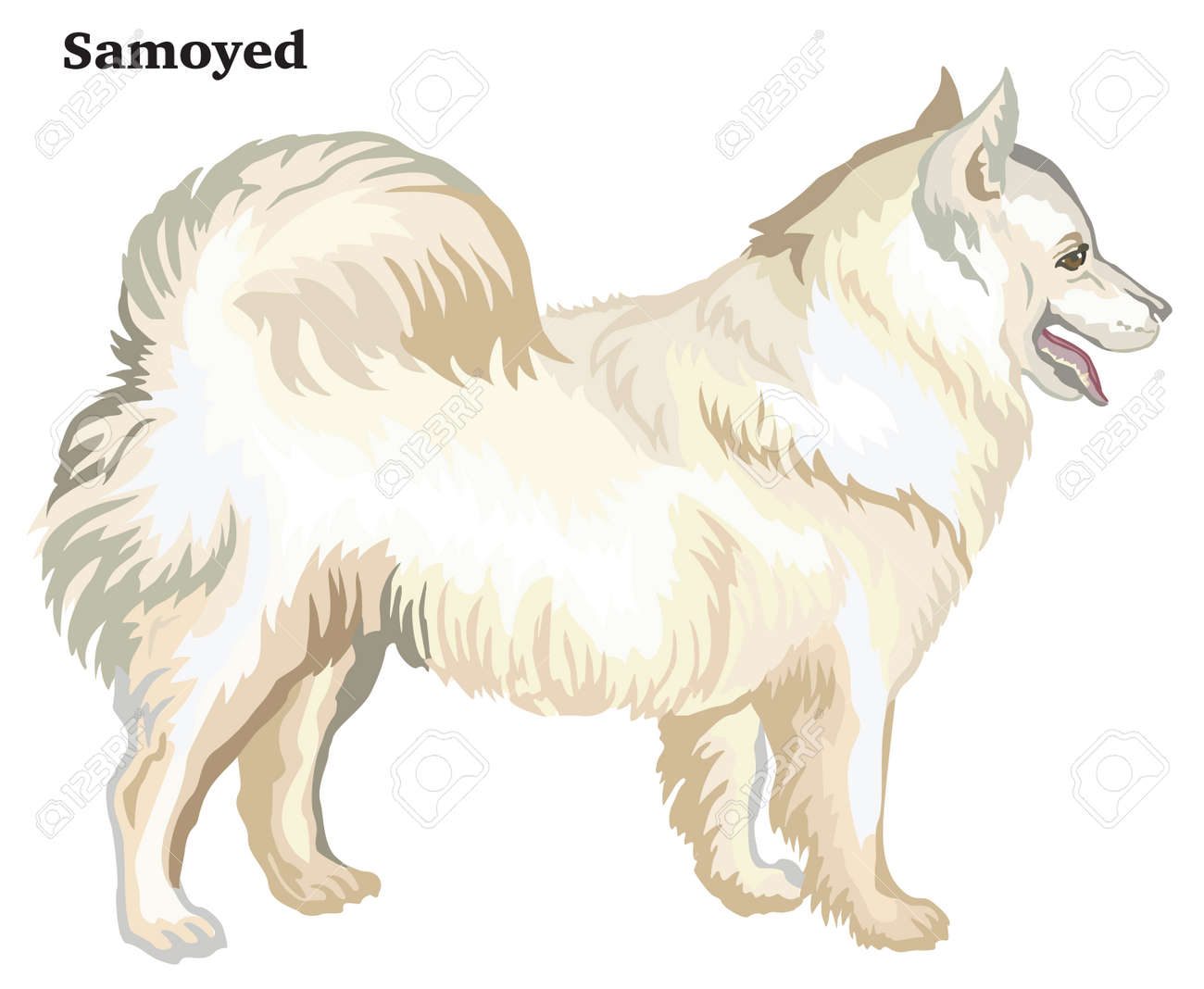 Portrait Of Standing In Profile Dog Samoyed Vector Colorful