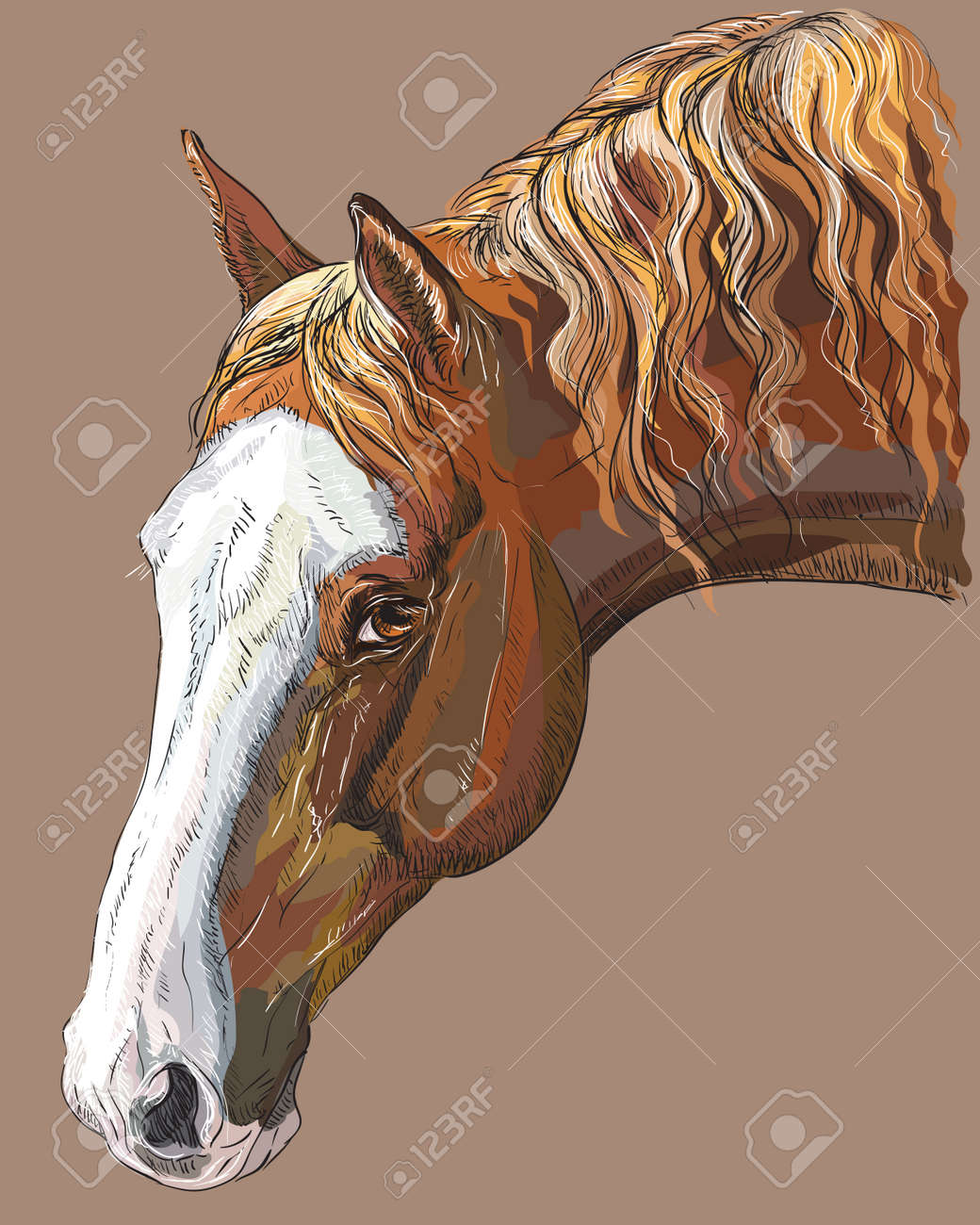 Colorful Portrait Of Dark Palomino Horse Horse Head With Long Royalty Free Cliparts Vectors And Stock Illustration Image 97412513
