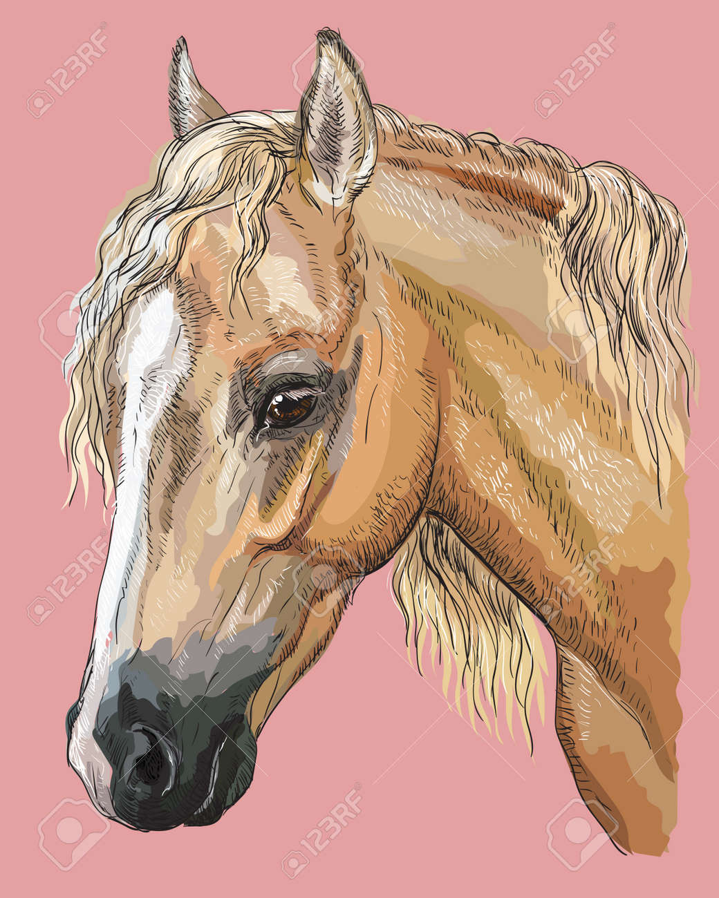 Colorful Portrait Of Palomino Welsh Pony Horse Head With Long Royalty Free Cliparts Vectors And Stock Illustration Image 103532971