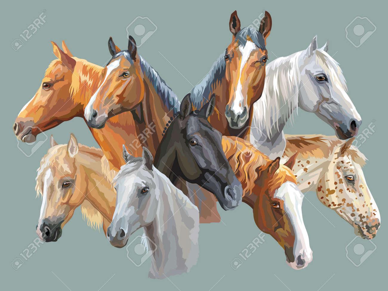 Set of colorful vector portraits of horses breeds (Trakehner horse, Welsh Pony, Orlov Trotter, Arabian horse, Appaloosa horse) isolated on grey background - 97459821