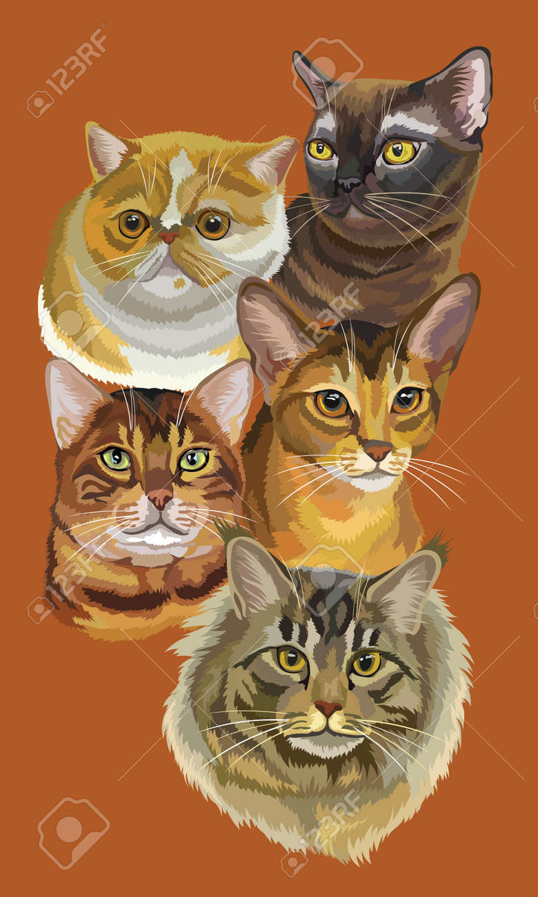 Vertical postcard with portraits of cats breeds (Exotic Shorthair,..