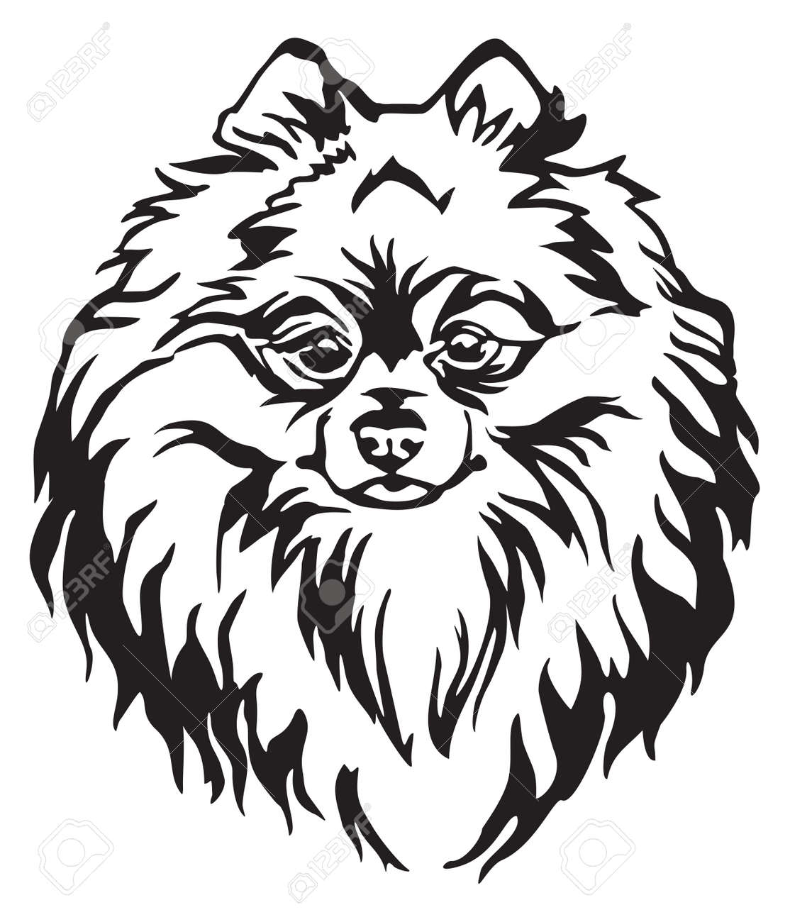 Decorative Portrait Of Dog Pomeranian Spitz Vector Isolated