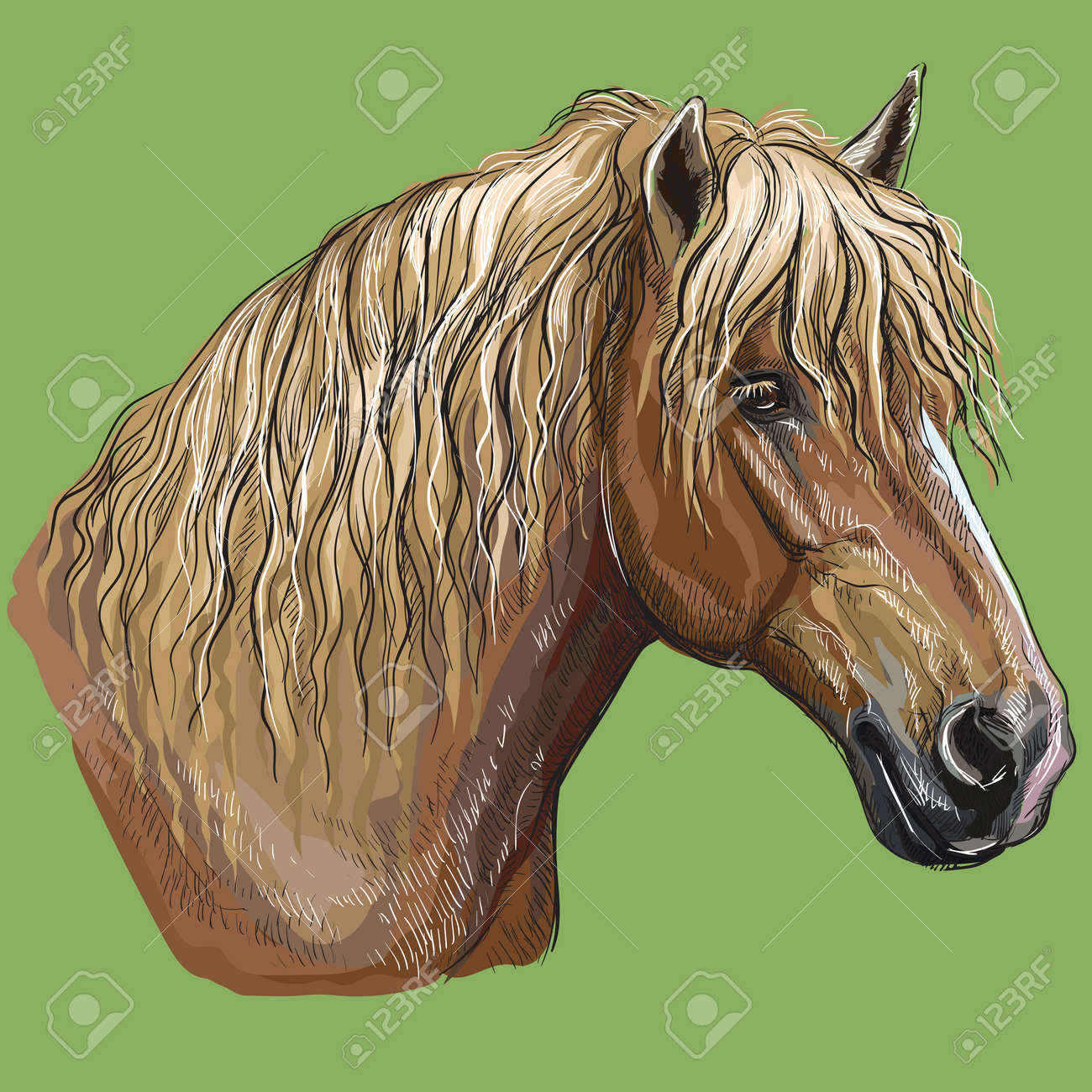 Colorful Hand Drawing Portrait Of Russian Heavy Draft Horse Royalty Free Cliparts Vectors And Stock Illustration Image 119455131