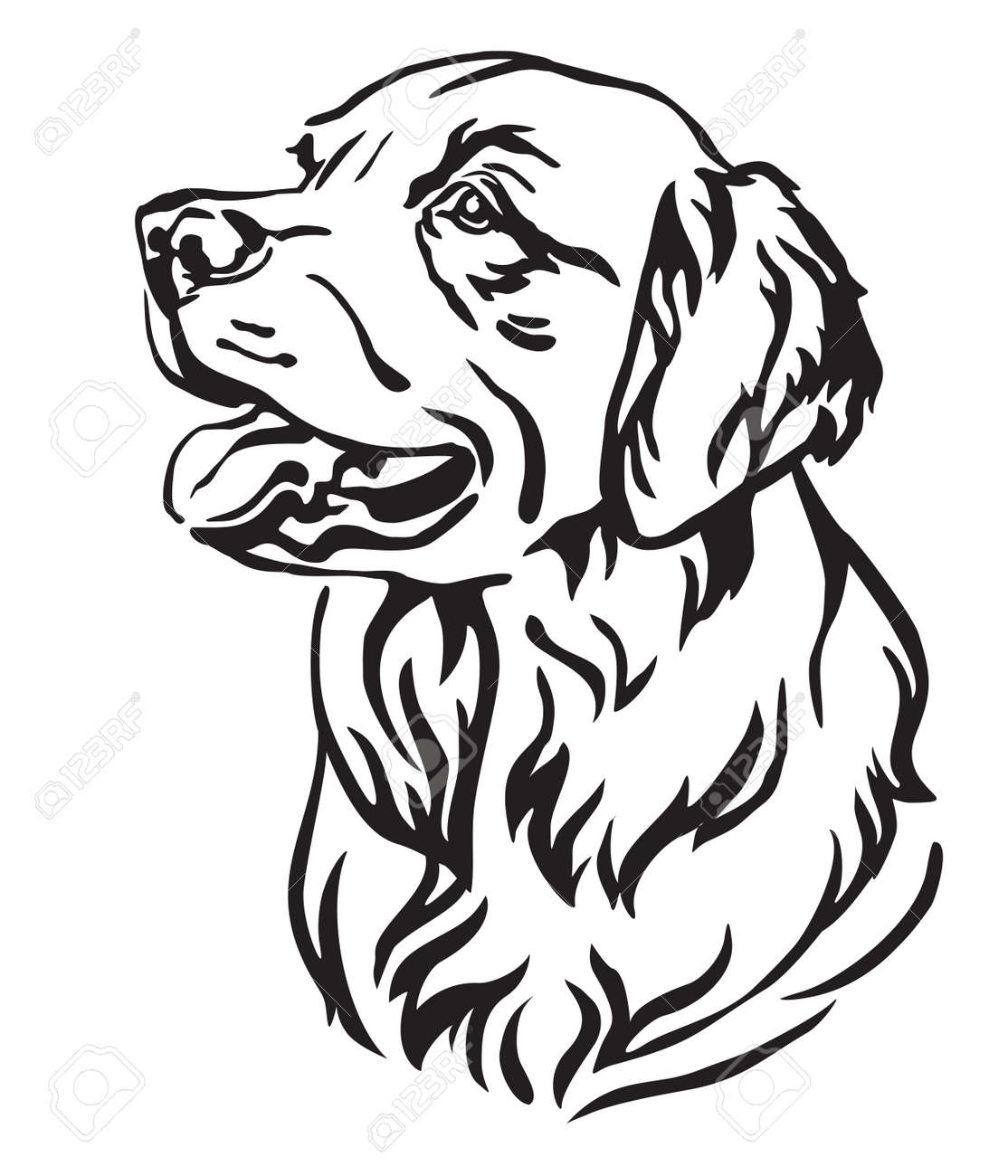 Decorative outline portrait of Dog Golden Retriever looking in profile, vector illustration in black color isolated on white background. Image for design and tattoo. - 119456771