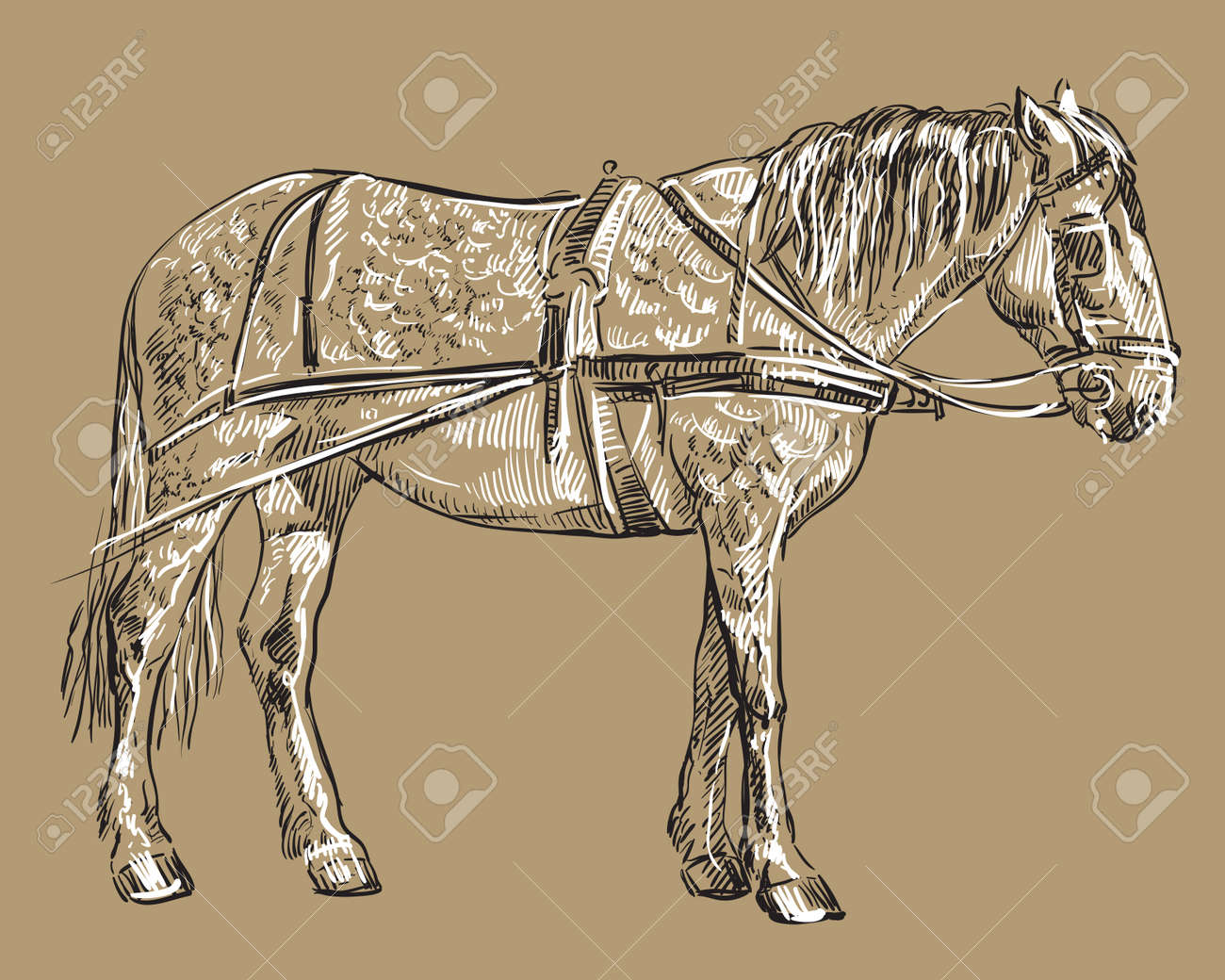Vector Hand Drawing Illustration Horse In Harness Standing In Royalty Free Cliparts Vectors And Stock Illustration Image 144612169