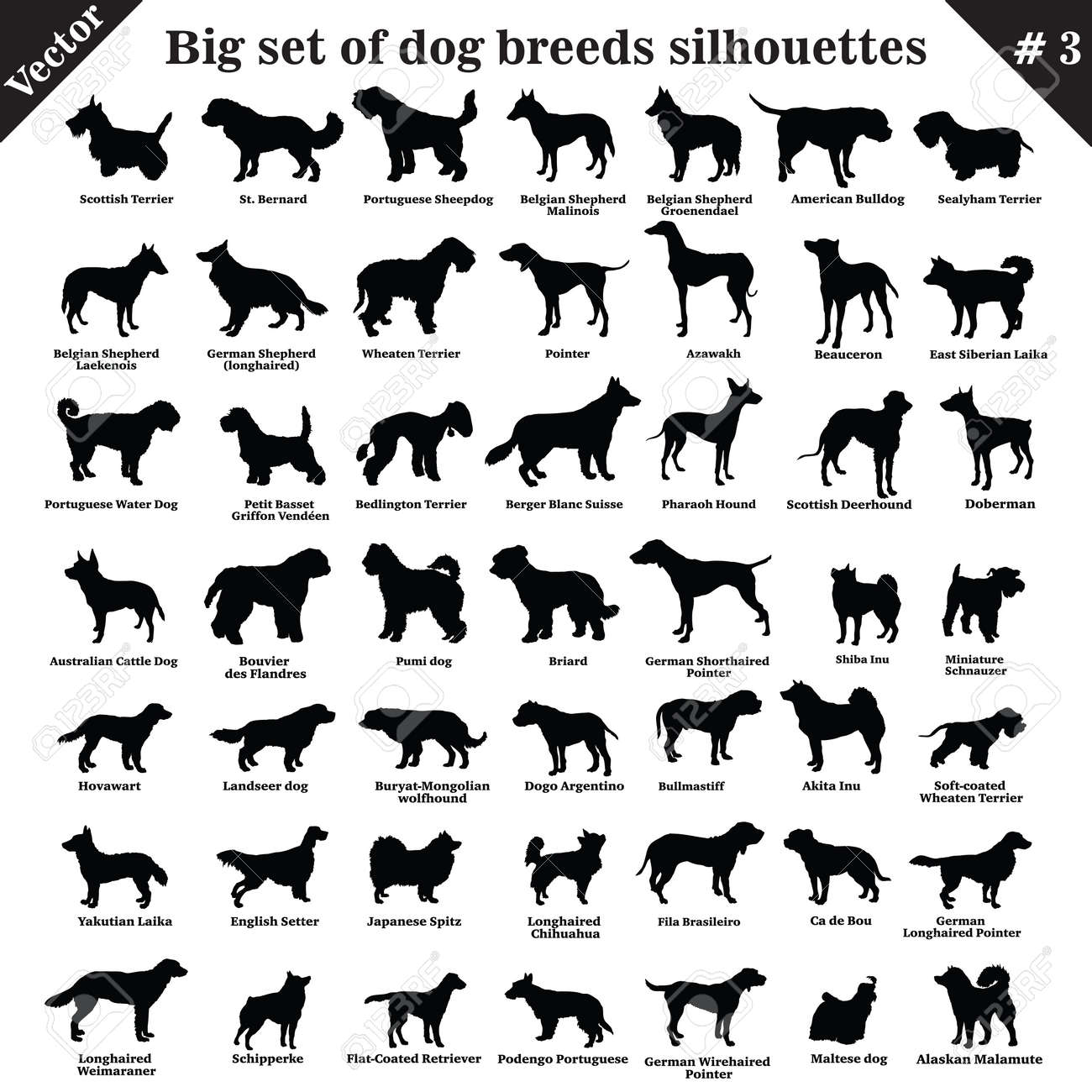 Big set of 49 different dogs, hounds, working, shepherd, terrier, companion, hunting. Vector set of different dogs standing in profile. Isolated dogs breed silhouettes set in black color on white background. Part 3 - 123214621