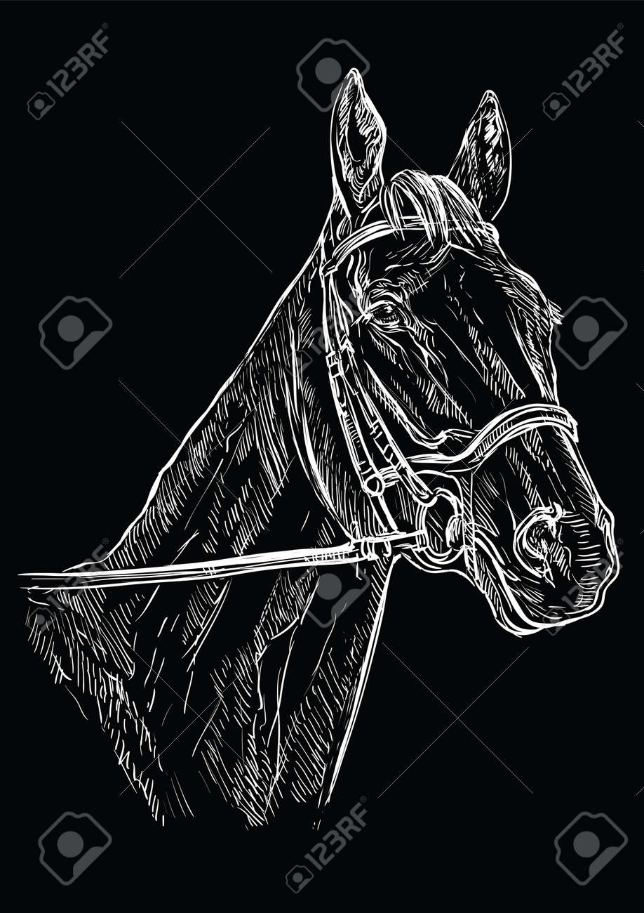 Horse Portrait With Bridle Horse Head In White Color Isolated Royalty Free Cliparts Vectors And Stock Illustration Image 135681400
