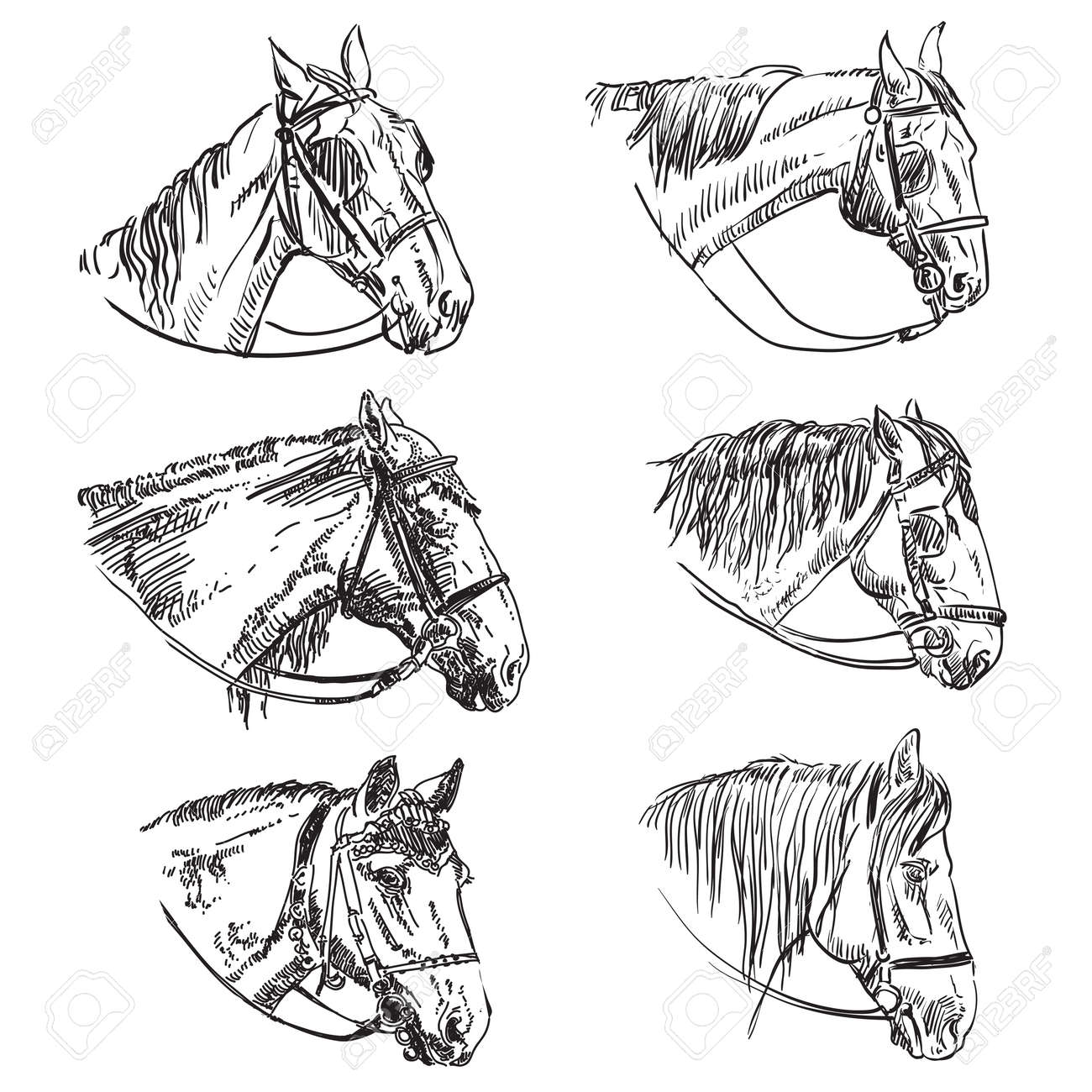 Hand Drawing Set Of 6 Horses Heads In Bridle Elegance Horses Royalty Free Cliparts Vectors And Stock Illustration Image 146968147