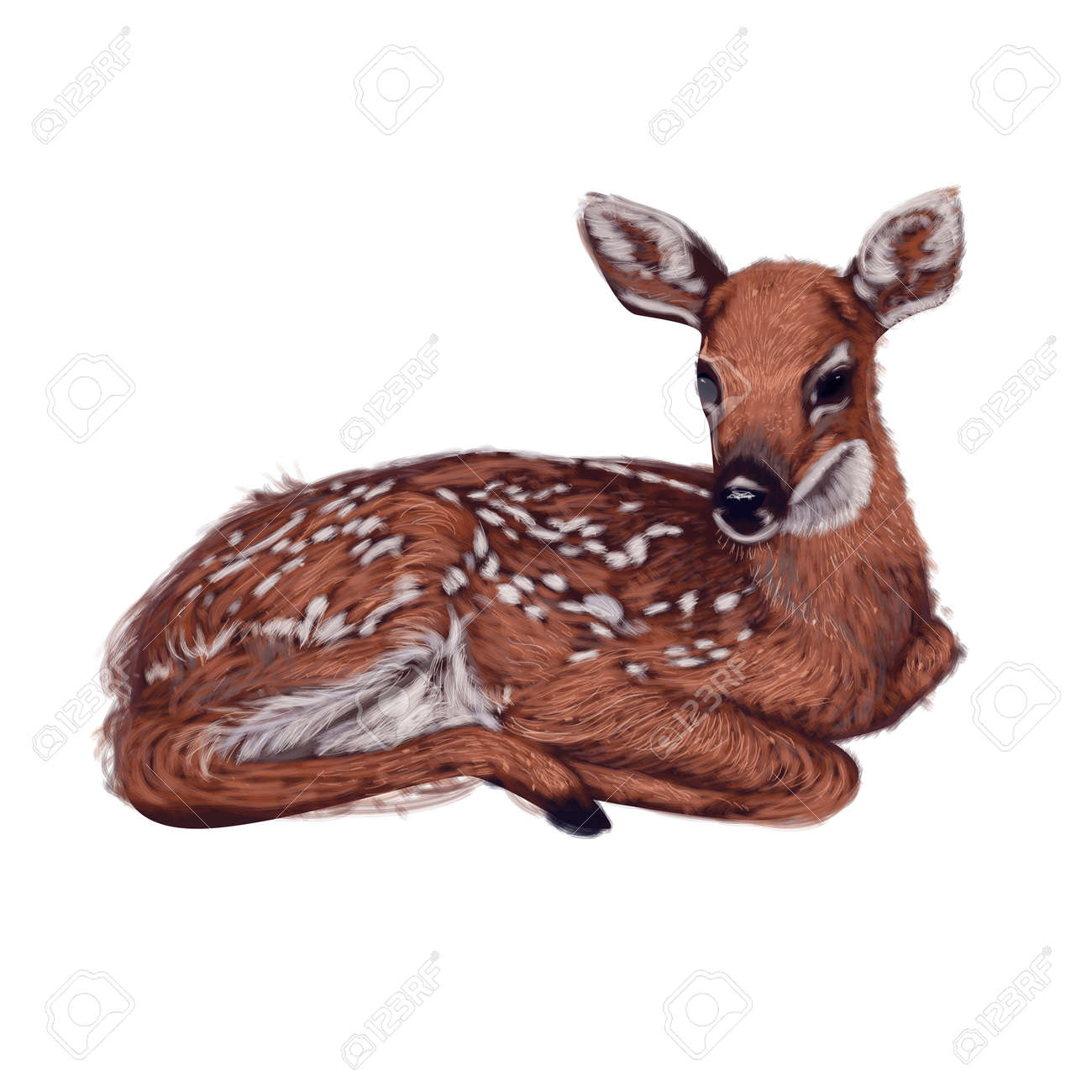 lying little baby deer illustration - 47706148