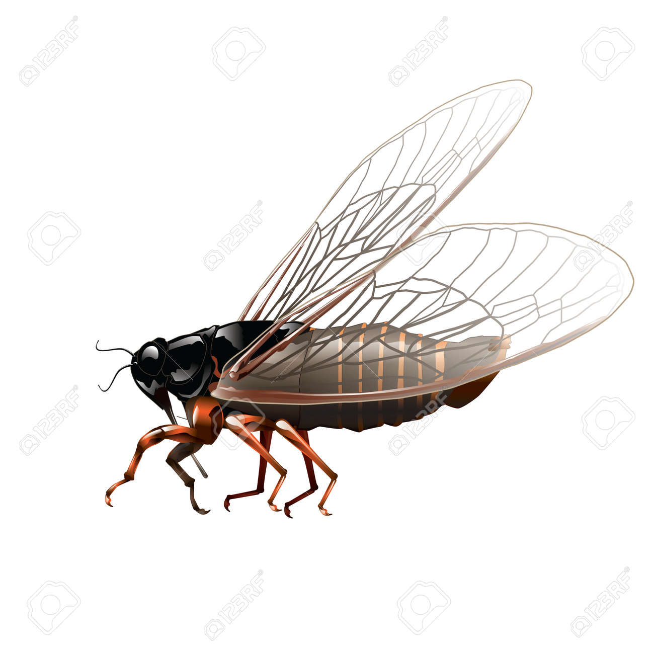 Cricket insect isolated on white. Vector, illustration. Stock Vector - 45514586