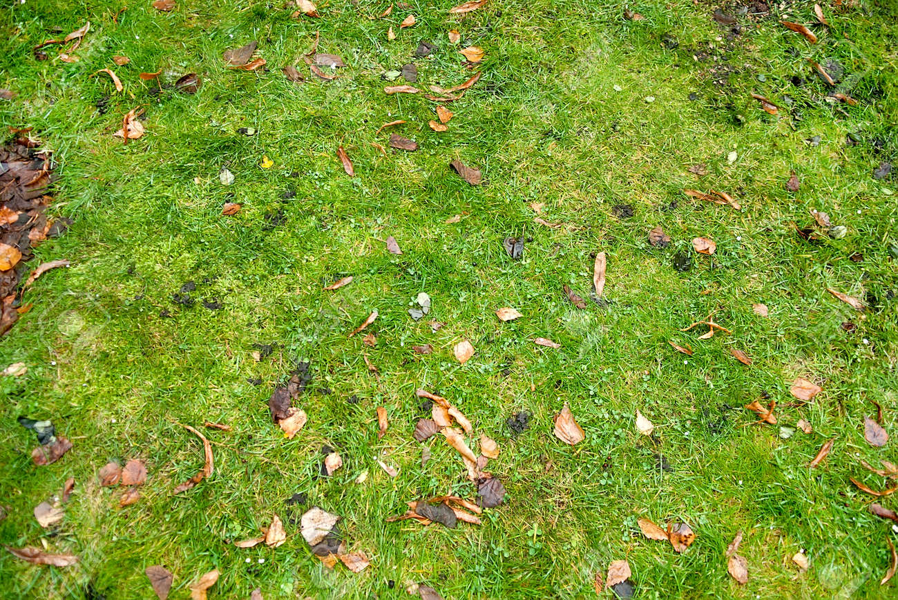grass field from above. Autumn Leaves On Green Grass Field, View From Above Stock Photo - 70746918 Field