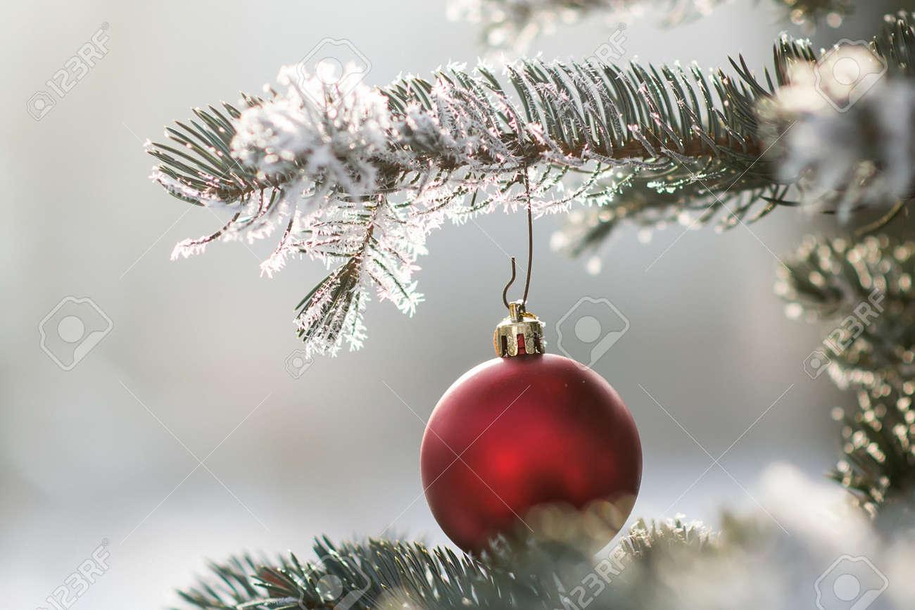 Branche D Arbre Sapin De Noel boule de noël rouge sur une branche d'arbre enneigée. fond de sapin de  noël. jouet rouge avec gel et flocons de neige. mise au point sélective