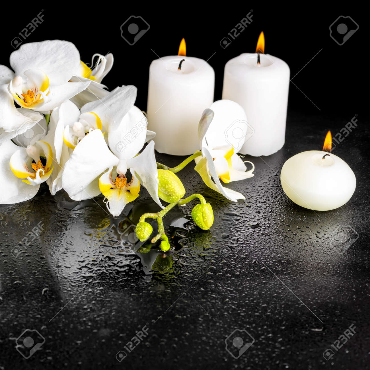 Beau Concept Thermale De Floraison Blanche Fleur D Orchidee