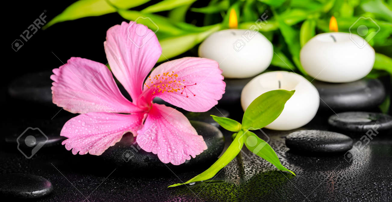 cadre magnifique spa de rose fleur d'hibiscus, des brindilles de