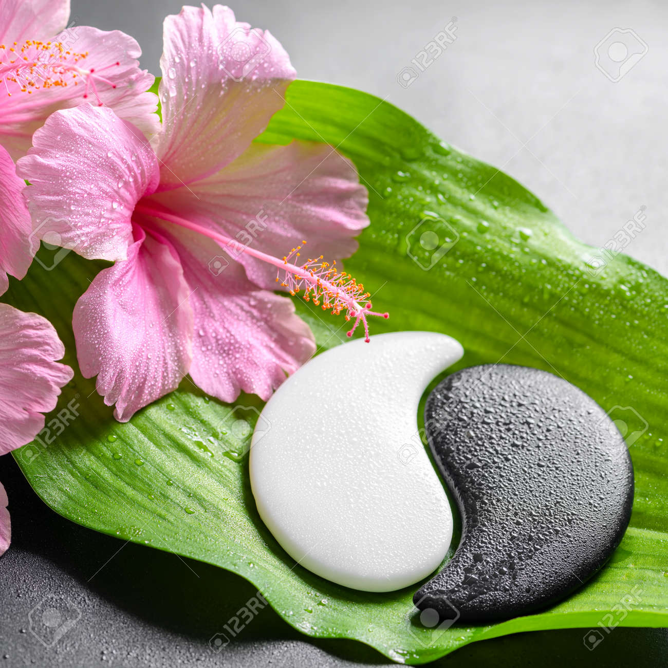 Beautiful Spa Concept Of Pink Hibiscus Flowers And Yin Yang Of