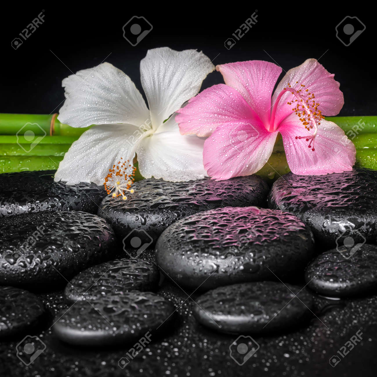 Spa Concept Of White Pink Hibiscus Flower And Natural Bamboo