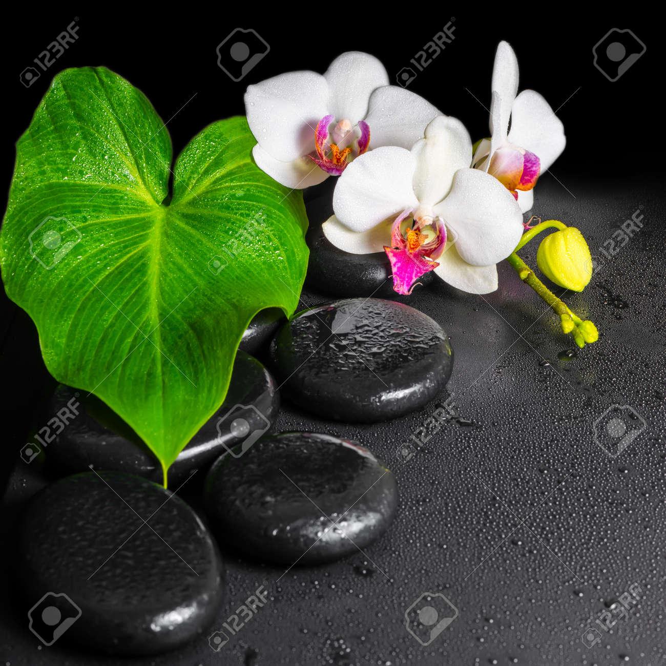 Hermoso Concepto De Spa De La Floracion De Orquideas De Flores