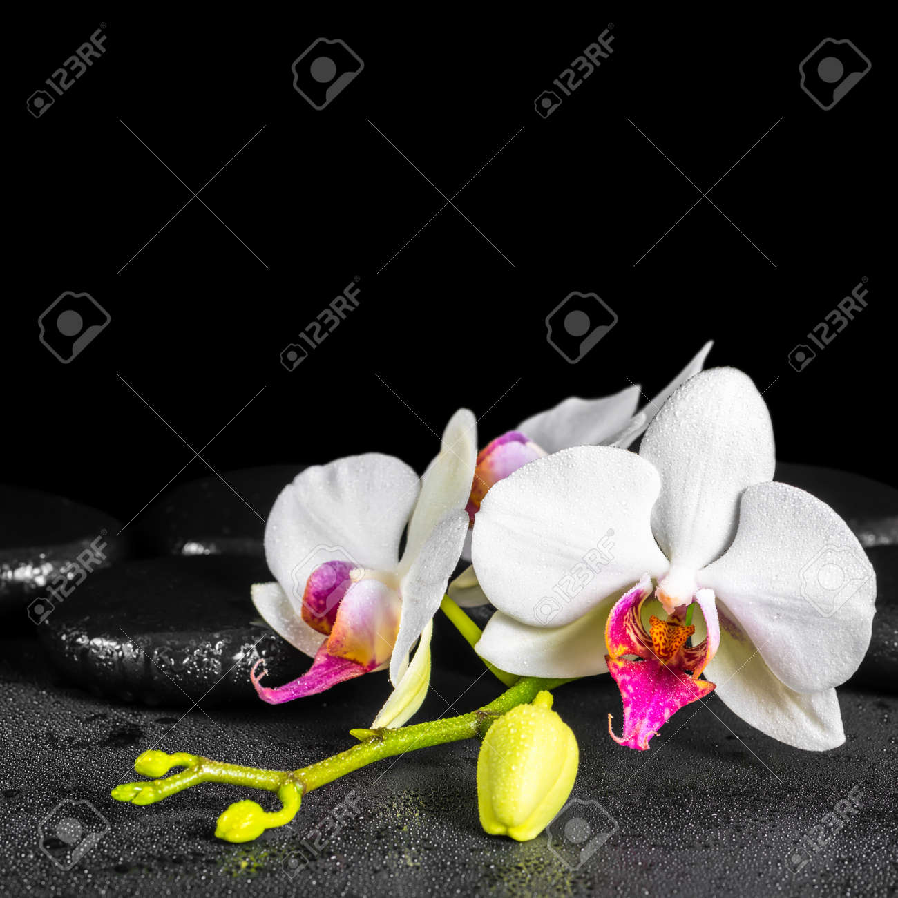 Beautiful Spa Background Of Blooming White And Red Orchid Flower