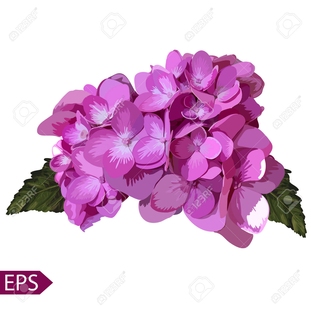 Vector blue realistic hydrangea, lavender. Illustration of flowers. Vintage. Can be used for gift wrapping paper. EPS - 39808578