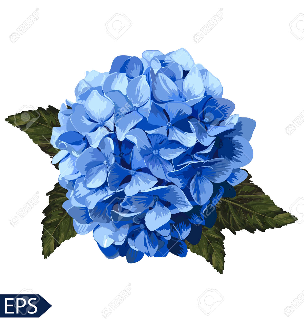 Vector blue realistic hydrangea, lavender. Illustration of flowers. Vintage. Can be used for gift wrapping paper. EPS - 39808579