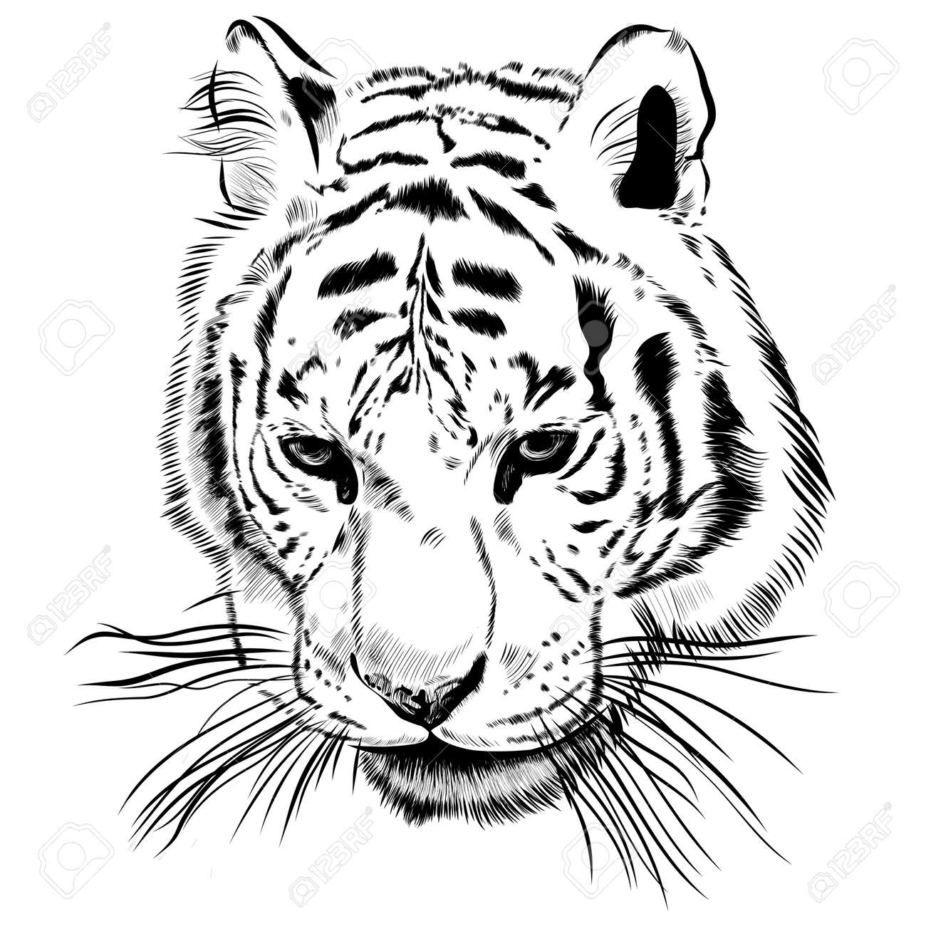 Original artwork tiger with dark stripes, isolated on white background, and sepia color version, outline llustration. - 46605032