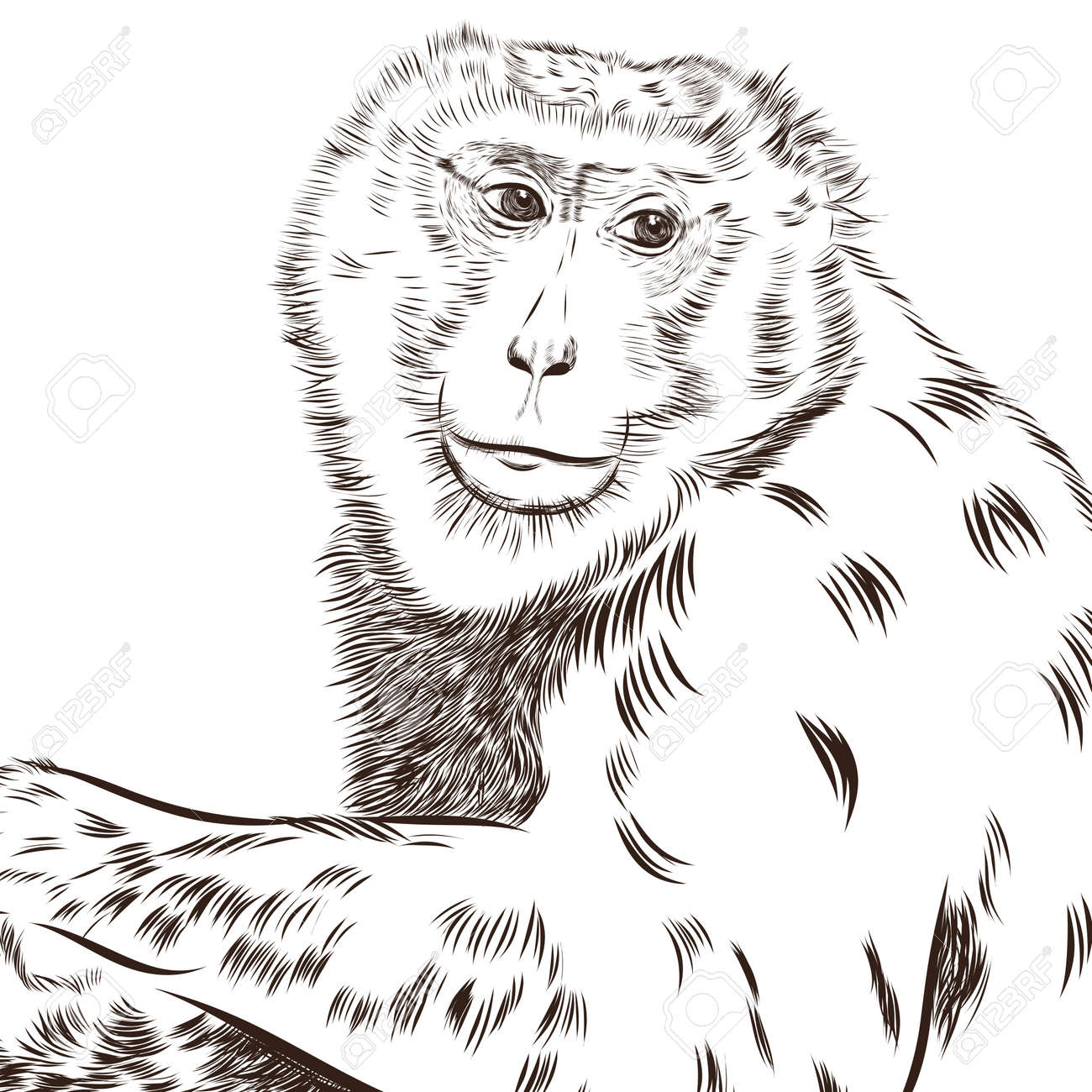 chimpanzee drawing vector animal artistic drawing use for your