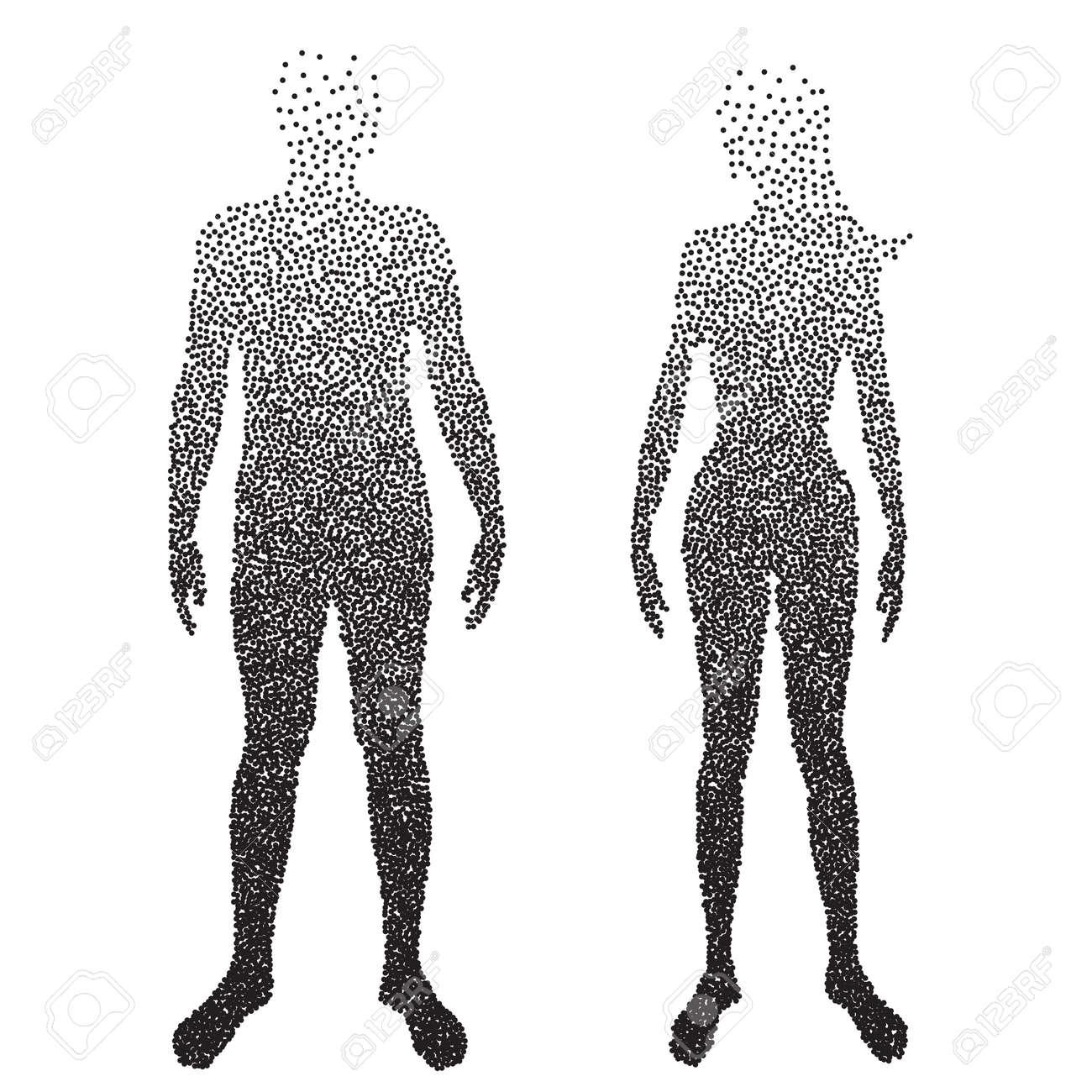 Medio Cuerpo, Anatomía Masculina Y Femenina, Diseñado Usando Punto ...