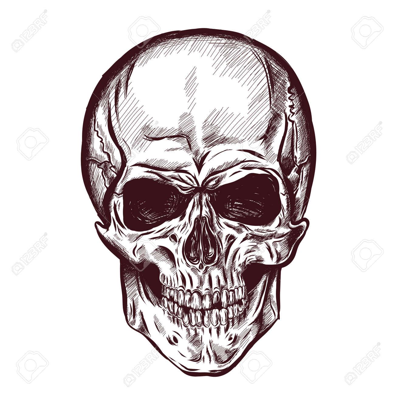Anatomía Cráneo Mano Dibujada Con Diferentes Tonos Y Líneas. Vector ...