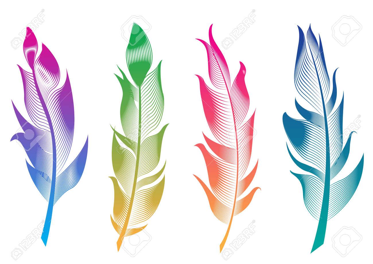 Vector Conjunto De Plumas De Aves Estilizadas Colección Lineal Para Decoración