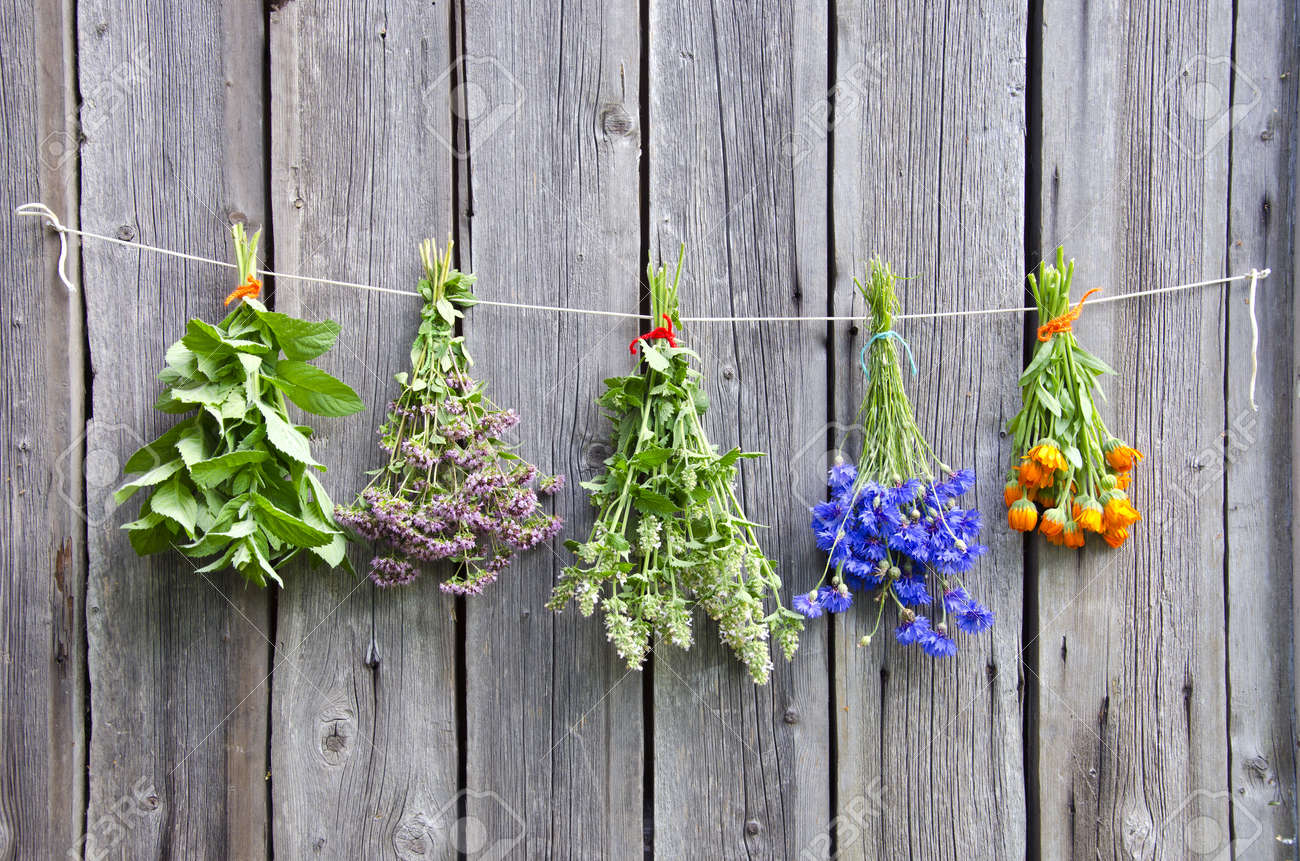 various medical herbs on old wooden farm wall - 14789303