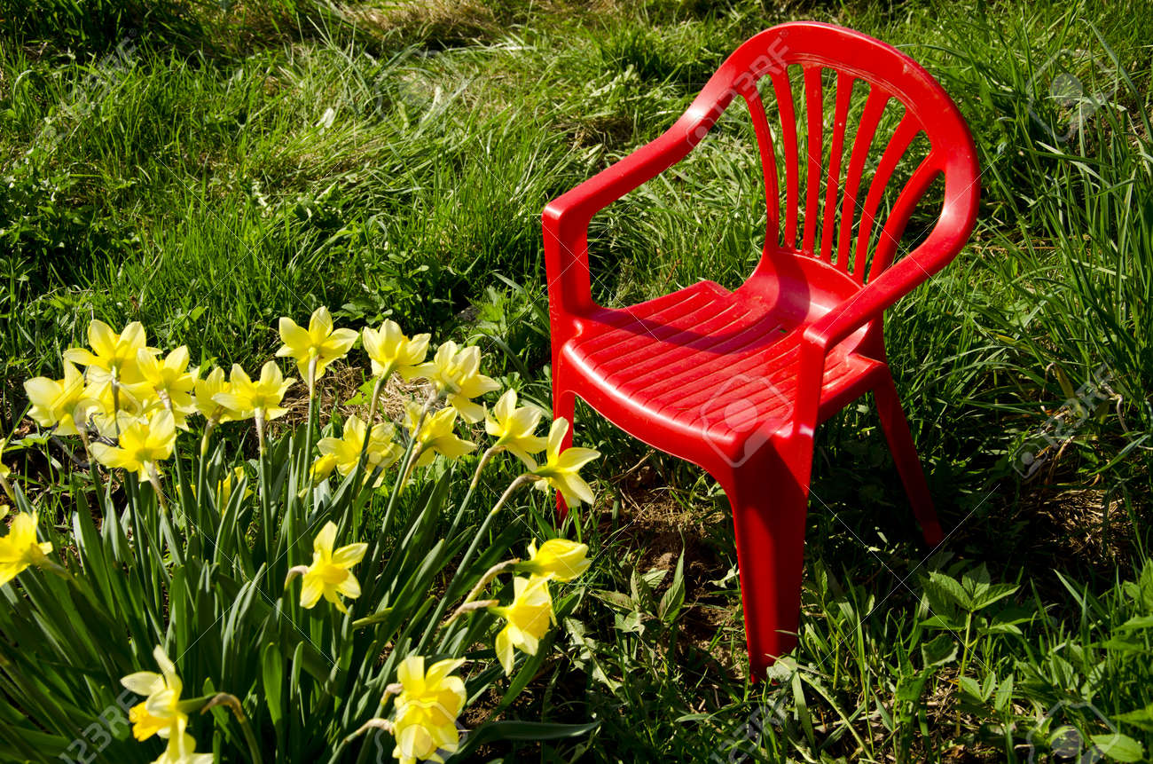 red children chair in garden on grass and spring narcissus - 15880233