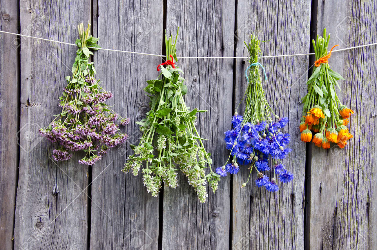 summer medical herbs bunches on old wooden wall - 16683993