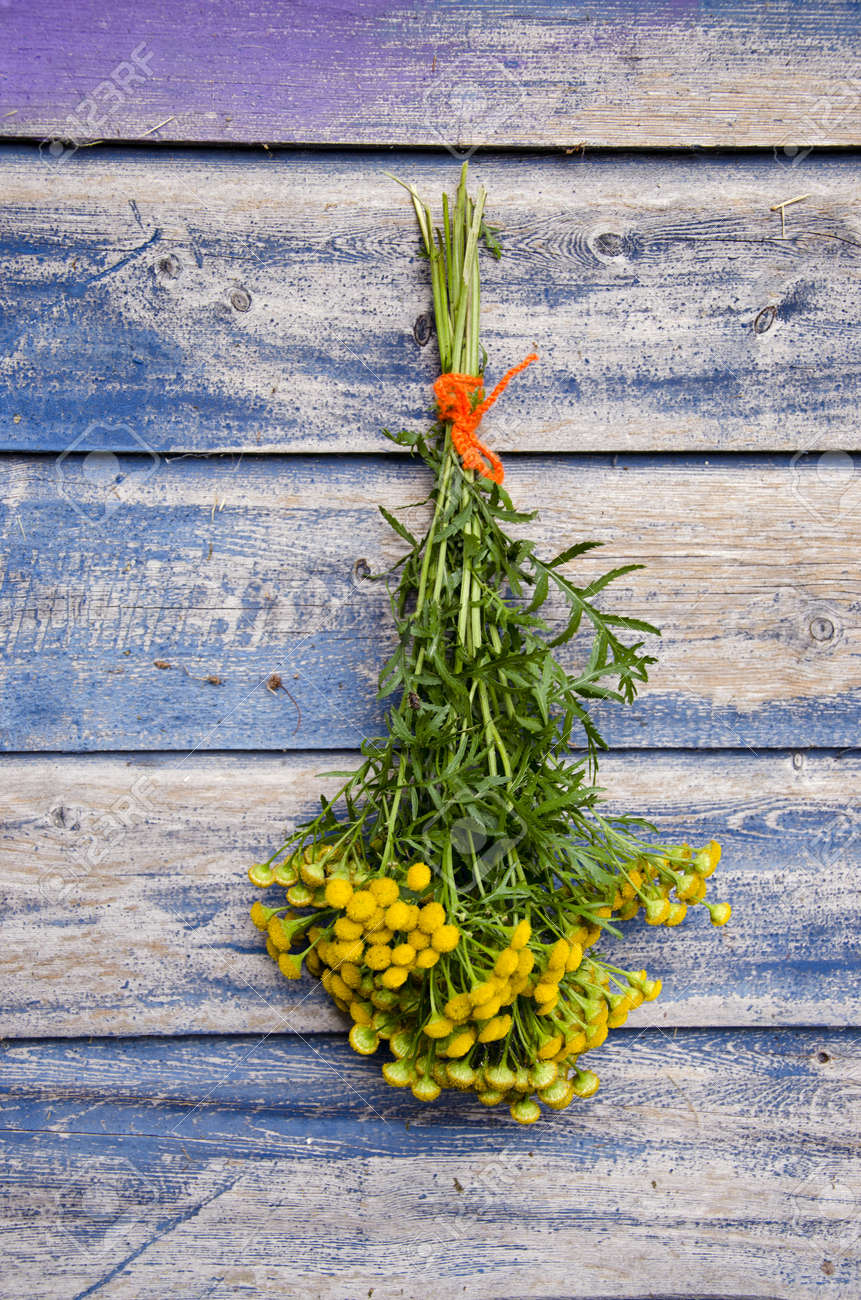 medical herb Common Tansy (Tanacetum vulgare) flower bunch on old wooden wall - 22076016
