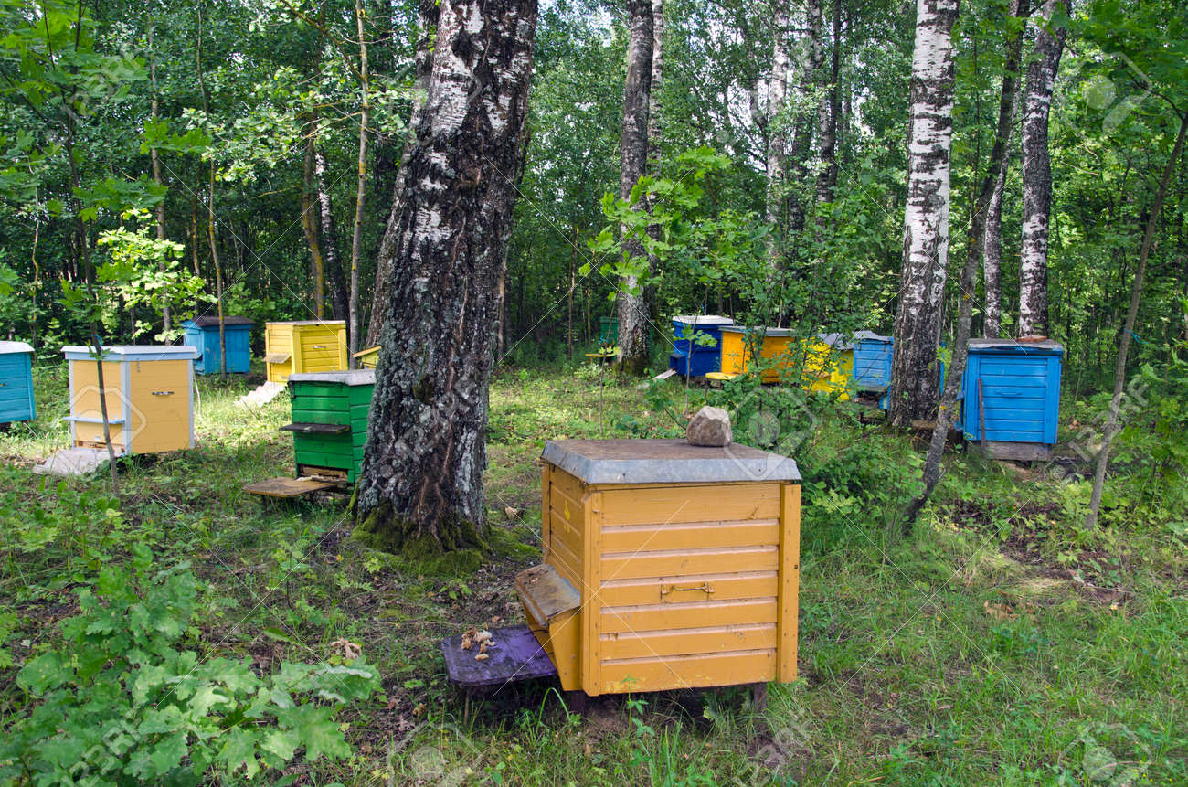 Multicolored Beehives Between Birch Trees Grove Stock Photo, Picture ...