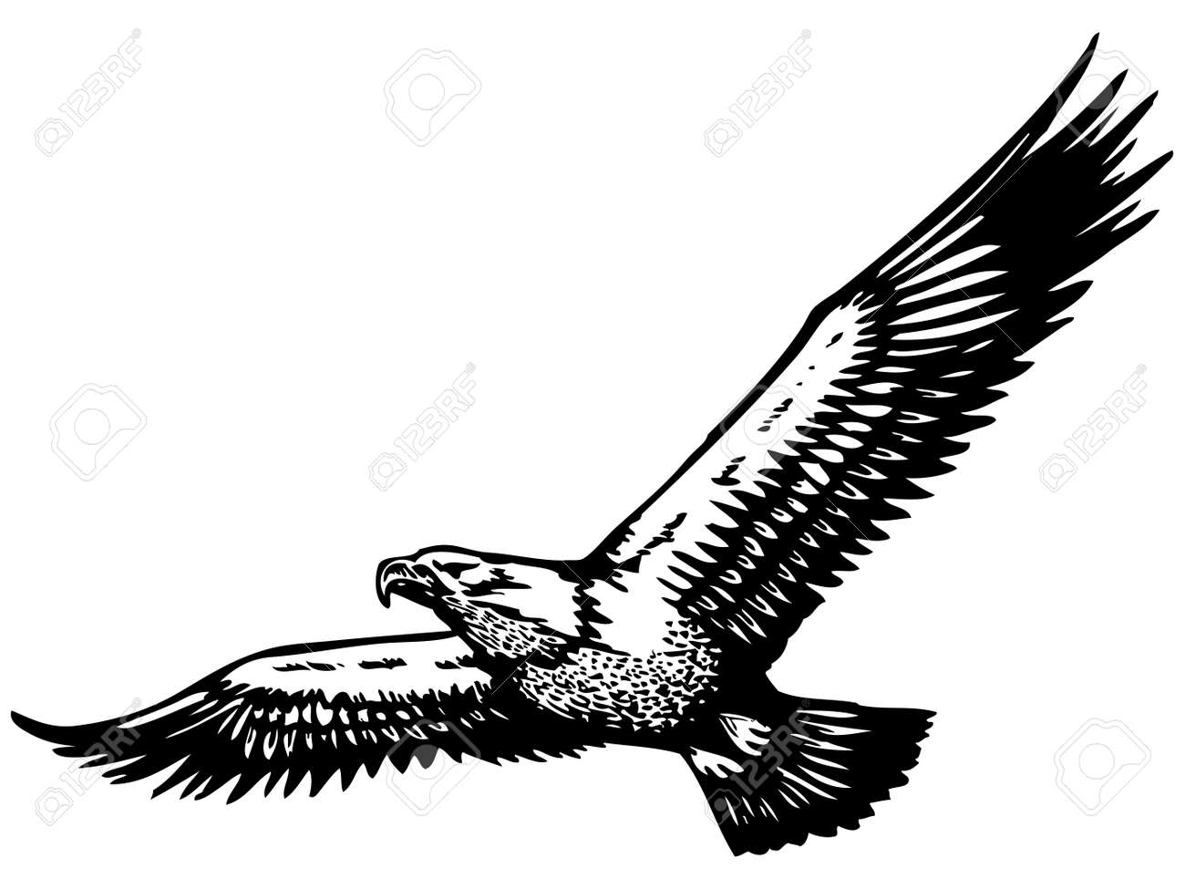 Flying eagle stock vector 13481566