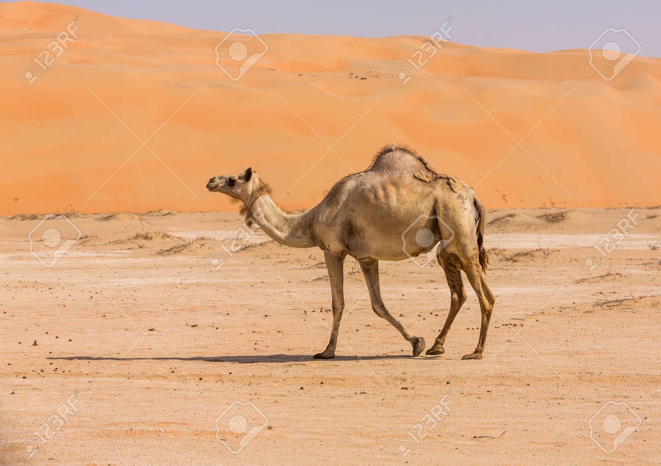 Картинки по запросу camel