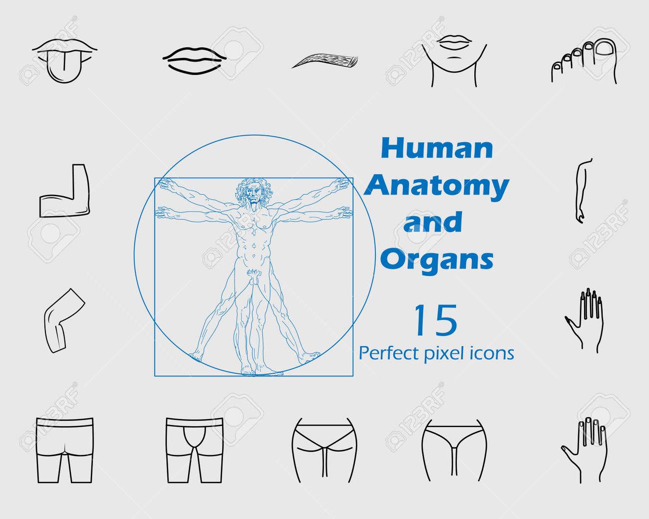 Human Anatomy Icon Set Premium Quality Graphic Design Signs