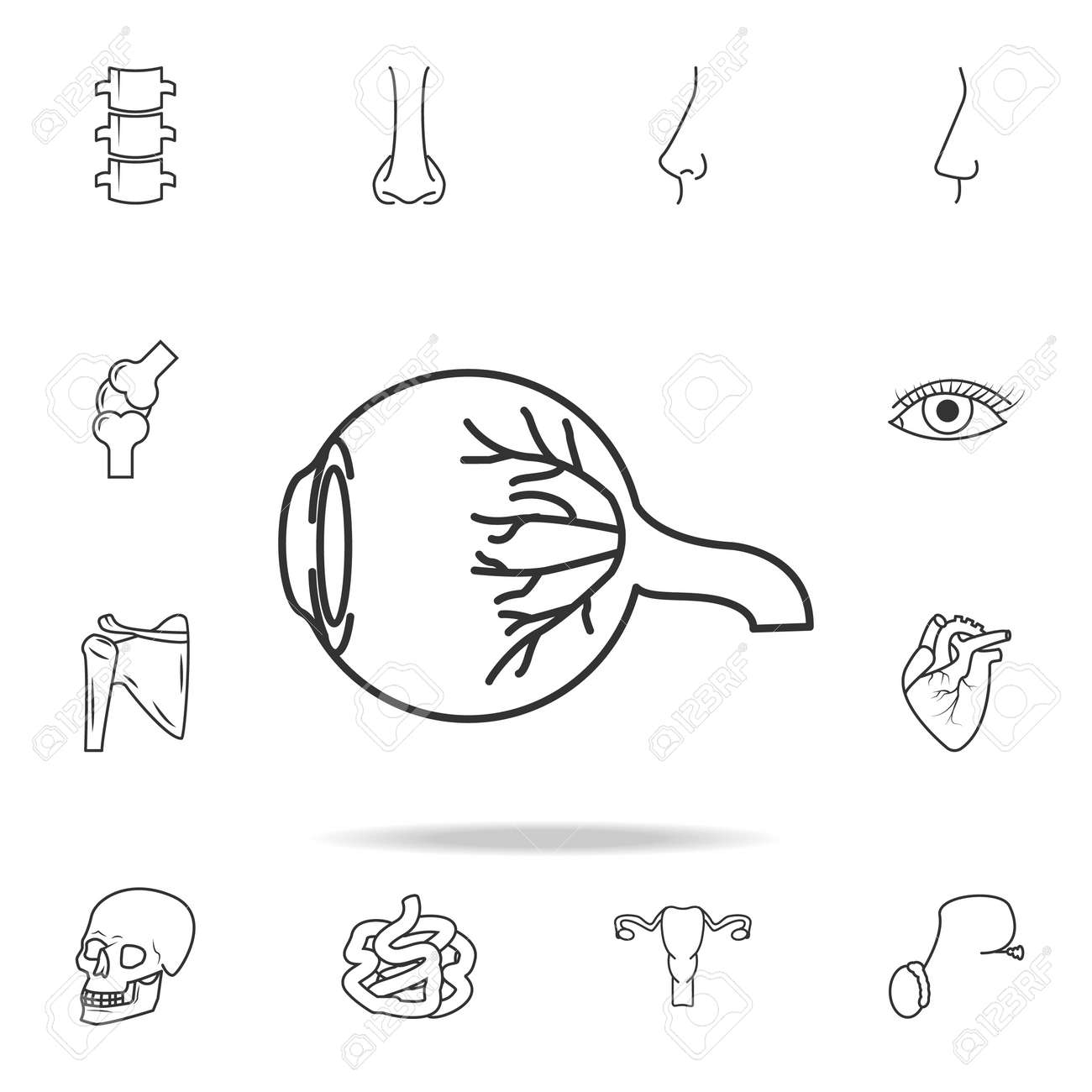 Eyeball Anatomy Icon. Detailed Set Of Human Body Part Icons ...