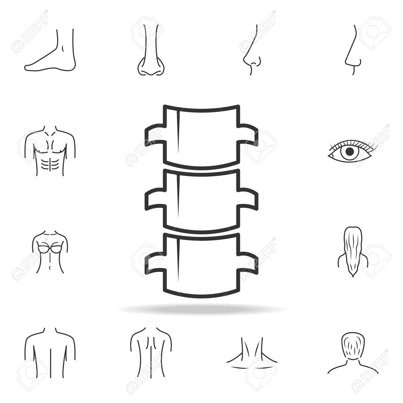 Spine Flat Icon Detailed Set Of Human Body Part Icons Premium