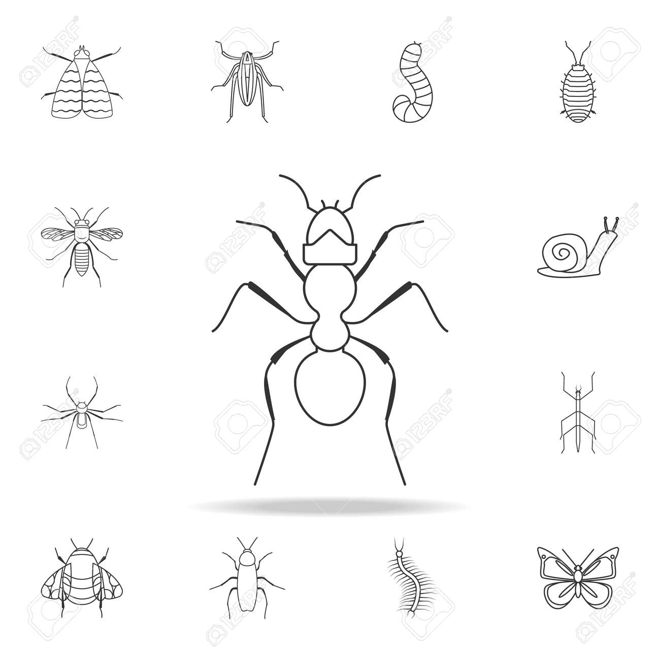 ant icon  Detailed set of insects line illustrations  Premium