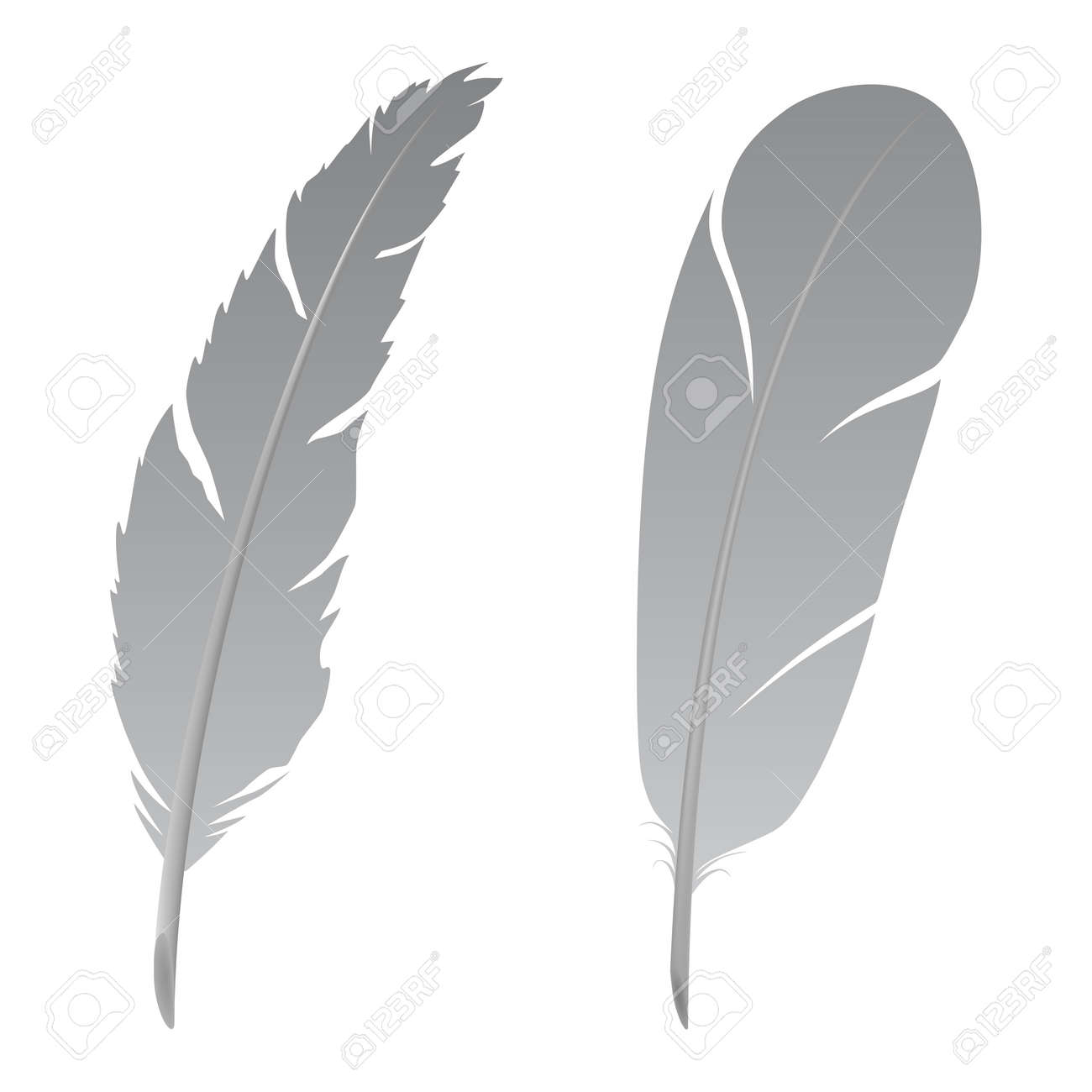 Feather Stock Vector - 2646040