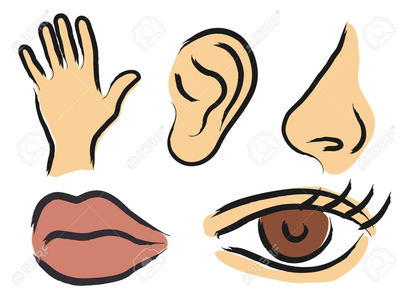 Vector icons of human senses Stock Vector - 2646046